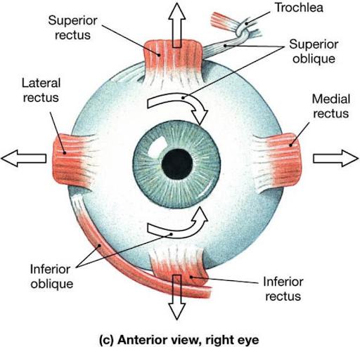Eye Diagram DUI Eye Test